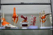 Где в ХНУРЭ найти скелеты, макеты суставов и УЗИ-аппараты