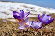 Радостный праздник весны, 8 марта